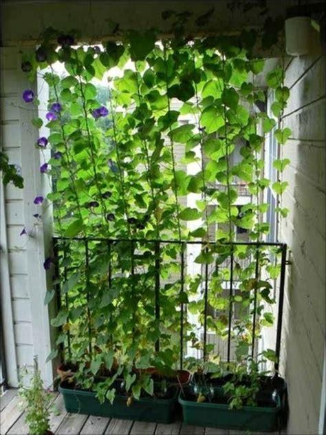 Kletterpflanzen Balkon Sichtschutz by Kletterpflanzen F 252 R Balkon 27 Ideen Archzine Net