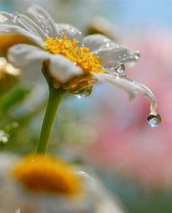 94 best images about flower on rainy day on Pinterest ...