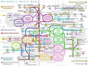 File Metabolic Metro Map Svg