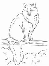 Cat Coloring Pages Tree Ragdoll Cats Siberian Sitting Printable Sits Drawing Ferret Kittens Supercoloring Footed Getdrawings Colouring Nature Bible Cartoons sketch template