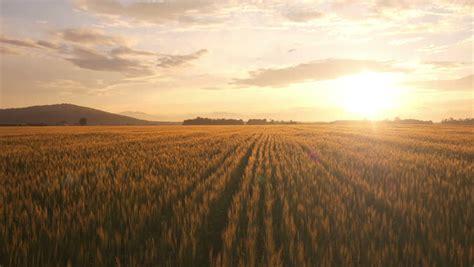 wheat farms  fields image  stock photo public