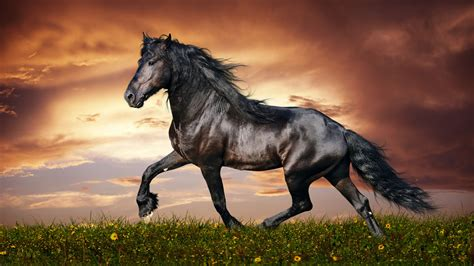 wallpaper horse   wallpaper hooves mane galloping