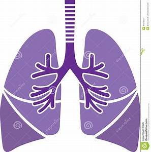 Healthy Lungs Stock Vector  Image Of Illustration  Biology