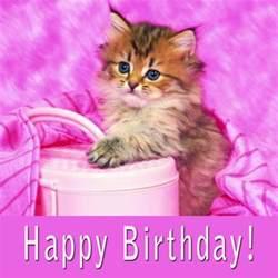 happy birthday cat birthday