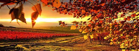 autumn vineyard facebook covers autumn vineyard fb covers