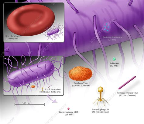 Virus Size Comparison - Stock Image - C039/1277 - Science ...