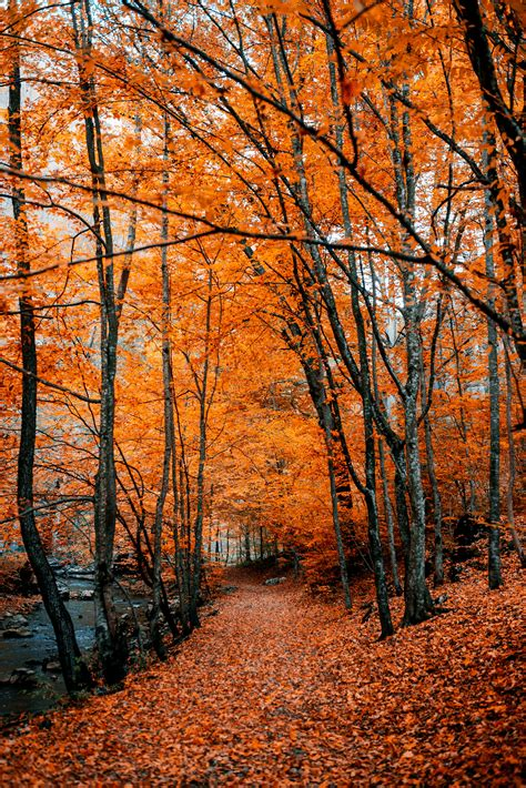 Download wallpaper 4016x6016 autumn, path, foliage, forest ...