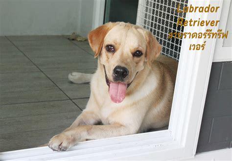 8 สายพันธ์ุสุนัขที่นิยมเลี้ยง - บริษัท เอกภพฟุตแวร์ จำกัด
