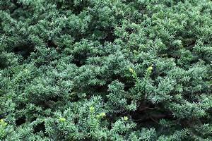 Free Images   Tree  Leaf  Flower  Pattern  Green  High  Herb  Evergreen  Botany  Fir  Conifer