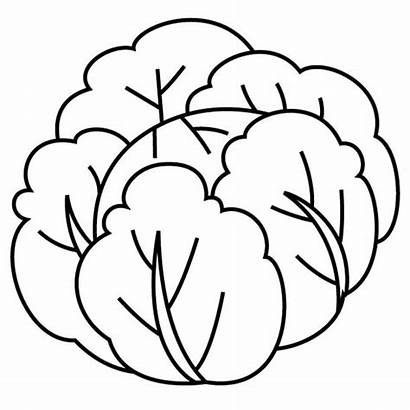 Cabbage Kale Coloring Drawing Pages Printable Drawings