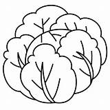 Cabbage Kale Drawing Coloring Pages Drawings Template Printable Sketch Clipartmag Templates Smart sketch template