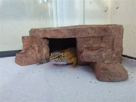 basking l for leopard gecko 17 best images about leopard gecko on caves
