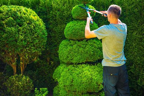 hedge trimming north shore auckland hedge removal
