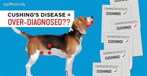 cushings   diagnosed  dogs dogs naturally