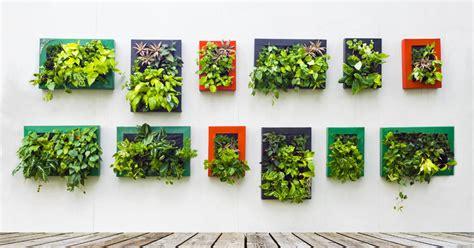 lebende pflanzenbilder kaufen lebende pflanzenbilder mein sch 246 ner garten