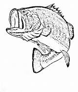 Fish Coloring Bass Cod Drawing Realistic Smallmouth Walleye Printable Drawings Detailed Catfish Getcolorings Getdrawings Paintingvalley Exclusive Colorings Davemelillo sketch template