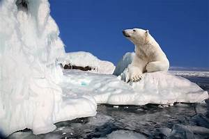 Explore the Arctic and Greenland on a Luxury Expedition ...  Arctic