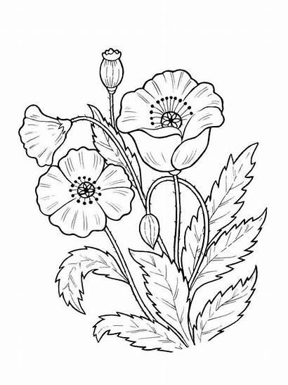Pflanzen Ausmalbilder Coloring Malvorlagen Ausdrucken Kostenlos Plants