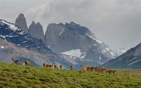 Horses Are Grazing On The Beautiful Background Of