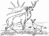 Coloring Deer Pages Lovely Coloringfolder Horse Printable Animal sketch template