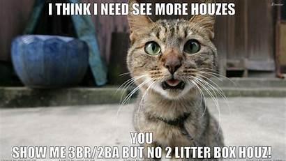 Funny Meme Cat Grumpy Quote Humor
