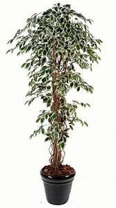 Arbre D Intérieur : arbre artificiel ficus lianes grandes feuilles plante d 39 int rieur cm vert cr me ~ Preciouscoupons.com Idées de Décoration