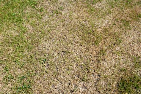 Rasen Ist Trocken » Was Können Sie Tun?