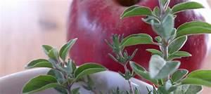 Naturkosmetik Selber Machen Blog : blog edenreich naturkosmetik rezepte graz steiermark naturkosmetik selber machen ~ Orissabook.com Haus und Dekorationen