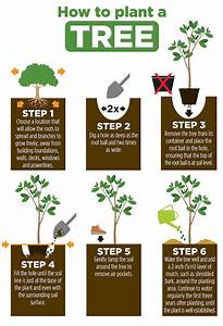 Planting A Tree Properly Gives It Better Odds For Survival