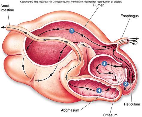 nutrition  digestion