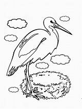 Coloring Stork Storks Birds Printable Designlooter Trailers 1200px 44kb Coloring2print Recommended sketch template