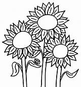 Sunflowers Clipart Coloring Flowers Clipground sketch template