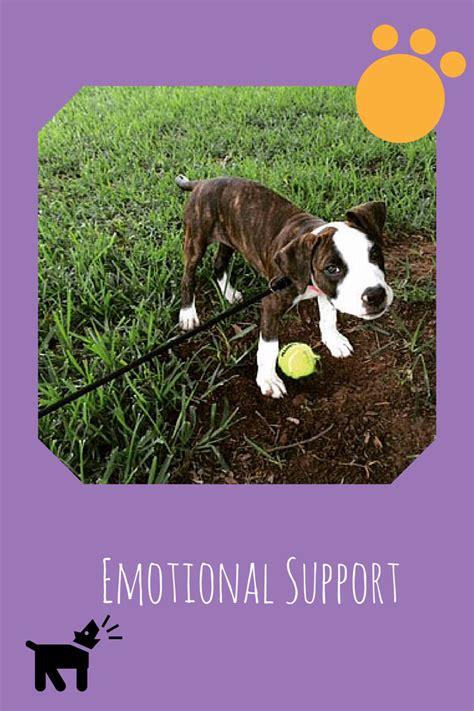 Emotional Support Animals  Anxious Kitten