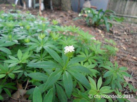 landscaping custom arizona backyard landscaping pictures hostas transplanting