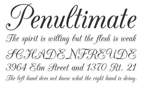 calligraphy fonts  bring charm   designs