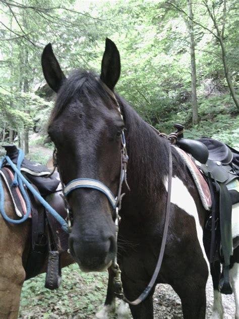horseshoe creek riding stable home facebook