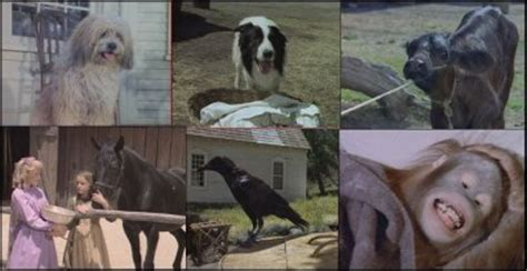 3 les animaux la maison dans la prairie house