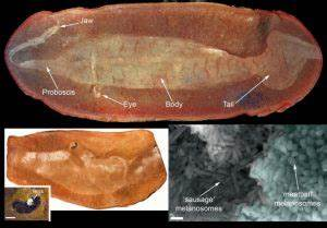 Prehistoric peepers give vital clue in solving 300-million ...