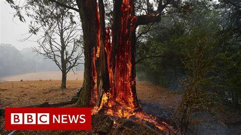 australia fires  animals struggling   crisis