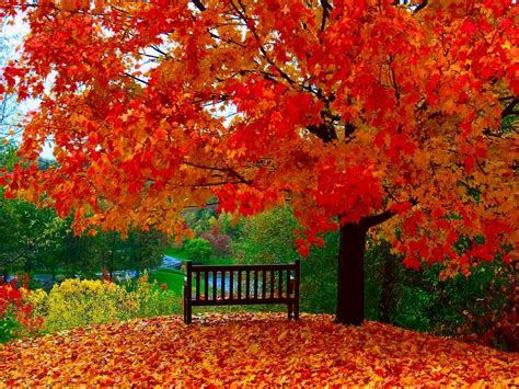 Autumn Wallpapers by Autumn Wallpapers Autumn Wallpaper The Free