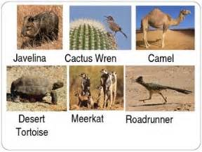 desert animals earth floor biomes autos post