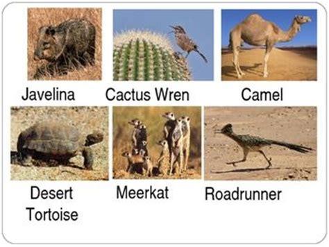 desert animals earth floor biomes autos post