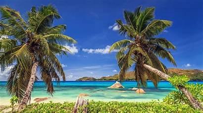 Tropical Palm Beach Landscape Island Trees Nature