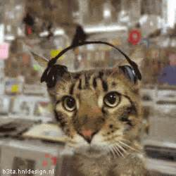 cats songs a cat listening to hip hop