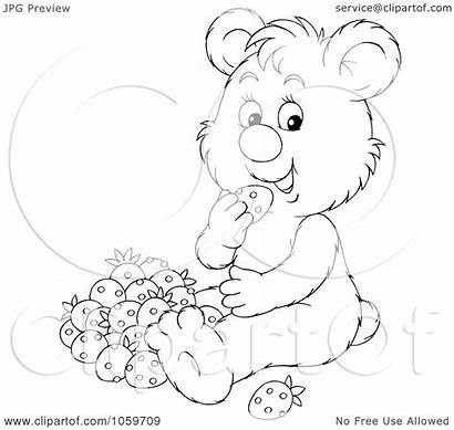 Coloring Bear Outline Eating Strawberries Royalty Illustration