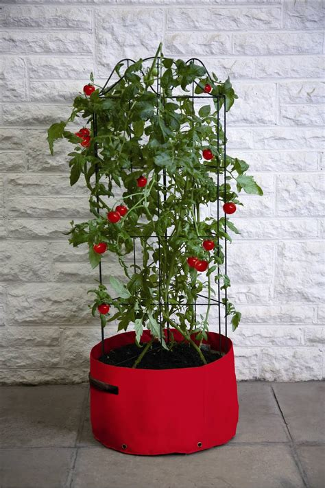 tomato planter growing tomatoes in patio planters tips haxnicks