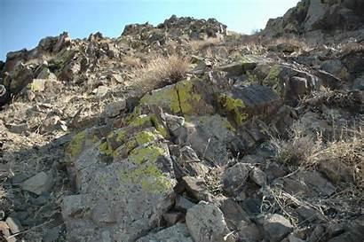 Cat Among Rocks Spot Pallas Cats Habitat