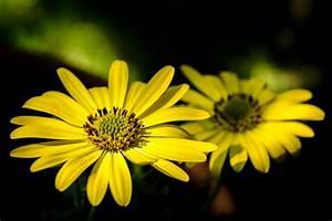 Gelbe Sommerblumen Mehrjährig : gelbe sommerblumen foto bild pflanzen pilze flechten bl ten kleinpflanzen natur ~ Frokenaadalensverden.com Haus und Dekorationen