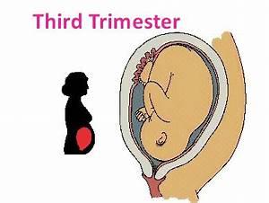 Kopfschmerzen Schwangerschaft 3 Trimester : toxoplasmose 3 trimester m bler i stil ~ Whattoseeinmadrid.com Haus und Dekorationen
