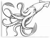 Squid Giant Gigante Coloring Calamaro Octopus Tattoo Riesenkalmar Illustrazione Engraving Calmar Colour Cartoon Clipart Simple Illustrations Incisione Dell Geant Gravure sketch template